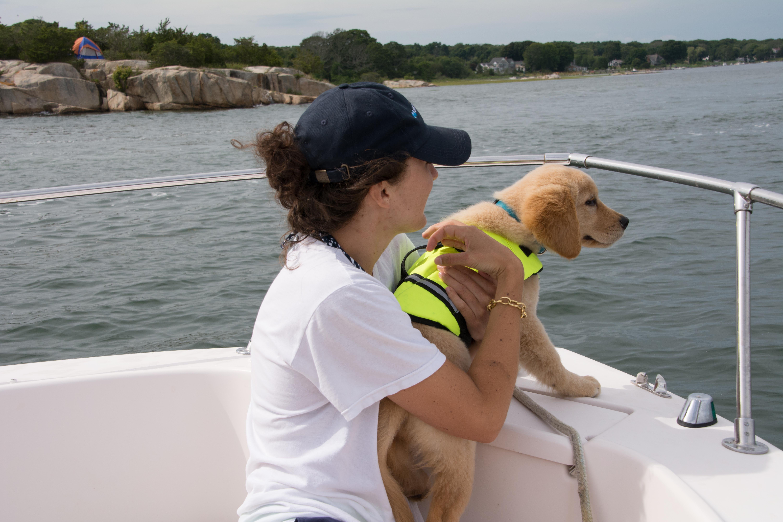 Golden Retriever Puppy The Casual Blog