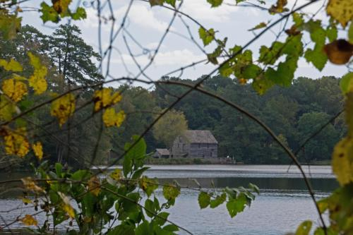 Yates Mill Pond, October 11, 2014
