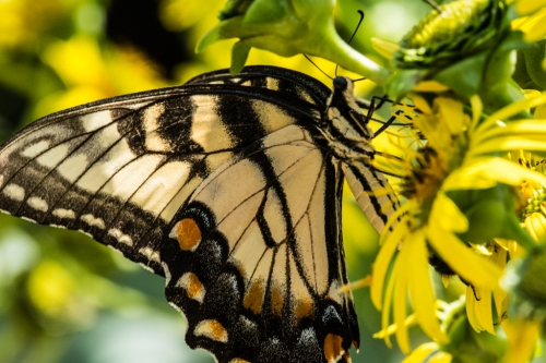 Raulston butterfliesBug 1-2