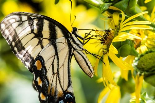 Raulston butterfliesBug 1-3