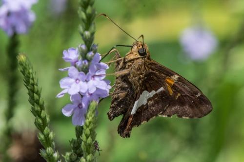 Raulston butterfliesBug 1-5
