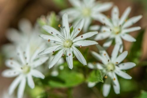 Eno flowers-9