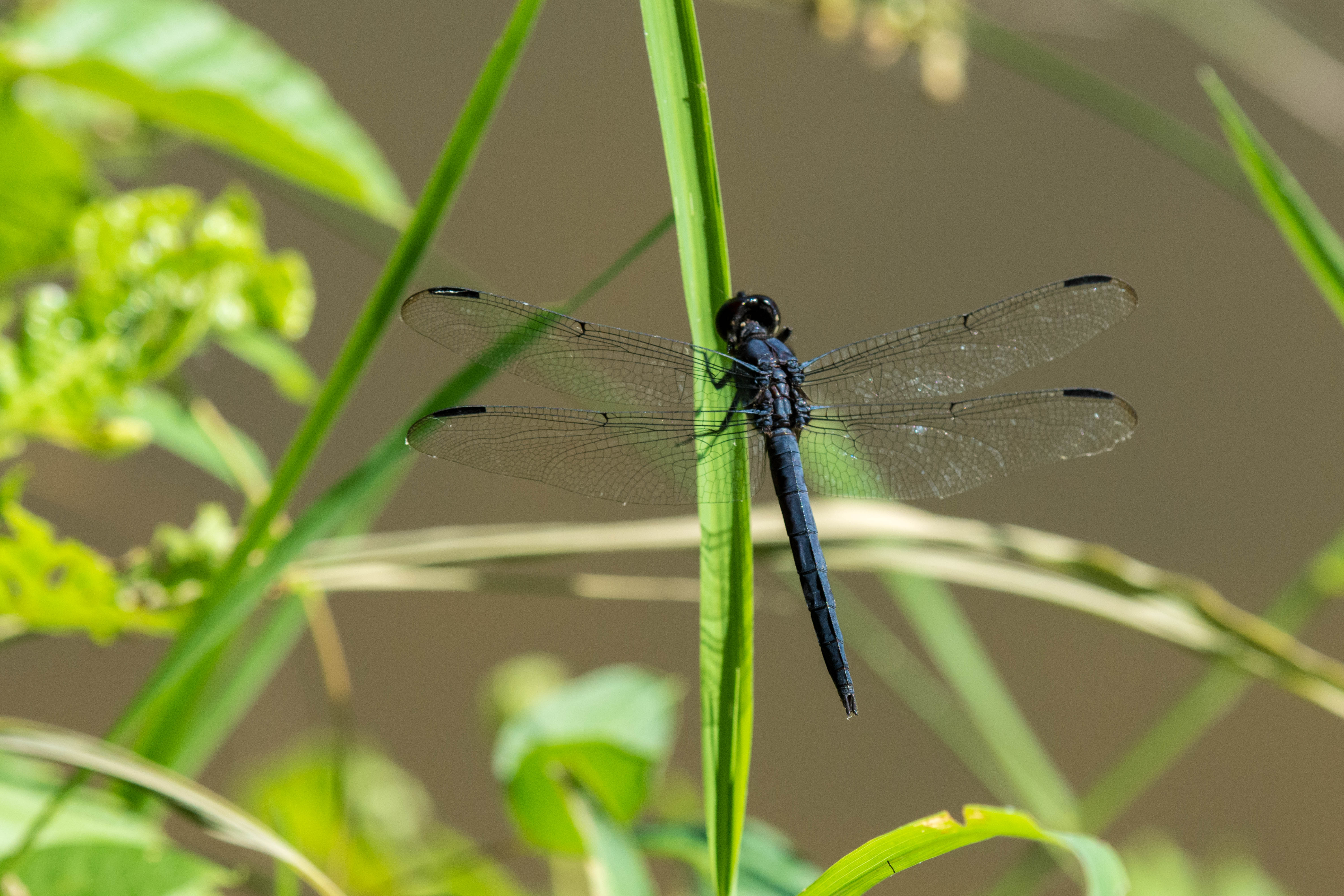 dragonflies on tyranny and the strange reverence for putin the
